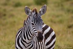 Kenya D05