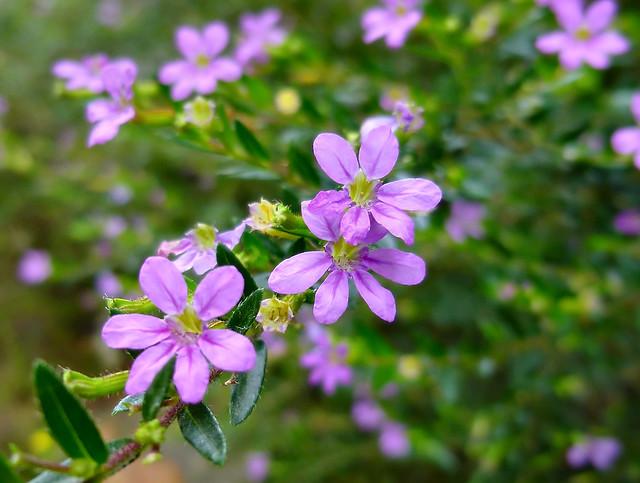 ¡Feliz jueves con flores!, Panasonic DMC-SZ7