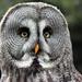 Big Owl by RestlessFiona