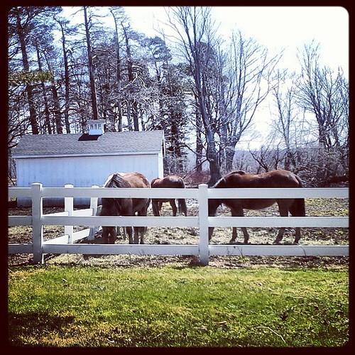 #horses #horses #newyork