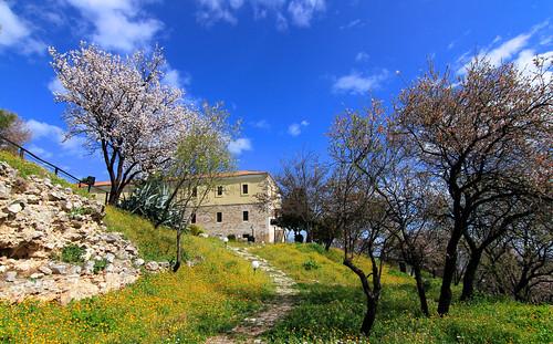flowers blossom springtime castleoflamia