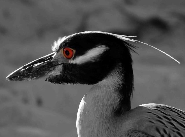 Cool bird at Grace Bay