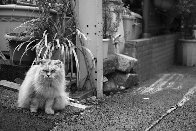 20130331_01_Monochrome Cat