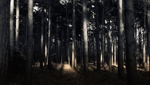 [フリー画像素材] 自然風景, 森林, 樹木, 風景 - イギリス ID:201304050600