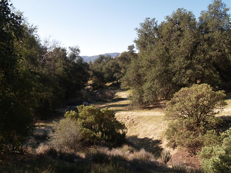 Hiking the PCT along San Ysidro Creek south of Warner Springs