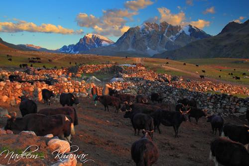 Yak farm (Behk). by Nadeem Khawar.