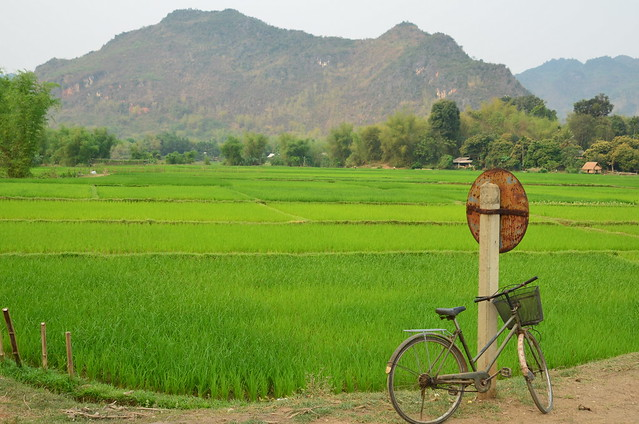 Rice paddy, Vietnam