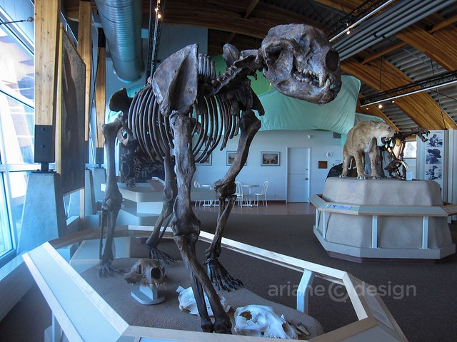 Giant Short-Faced Bear (Arctodus Simus)