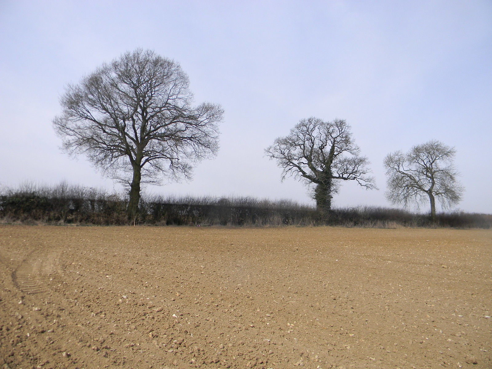 trees Wendover Circular via Lee