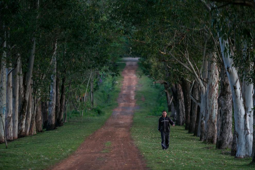 Un hombre camina por un bello sendero bordeado de eucaliptos en la ciudad de Itacurubí. (Tetsu Espósito)