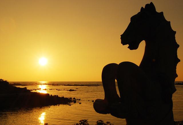 Seahorse Sunset