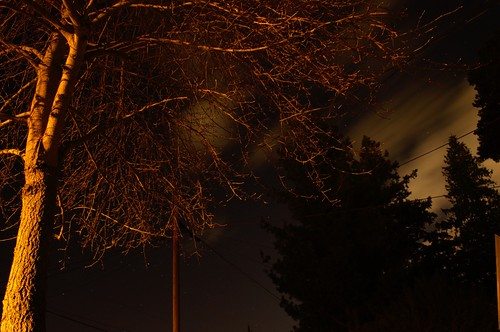 Leafless Tree - Long Exposure
