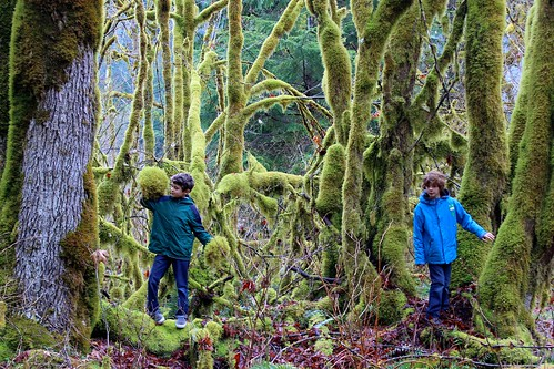 trees wild forest washington moss baker sam things mount charlie where national rumpus are