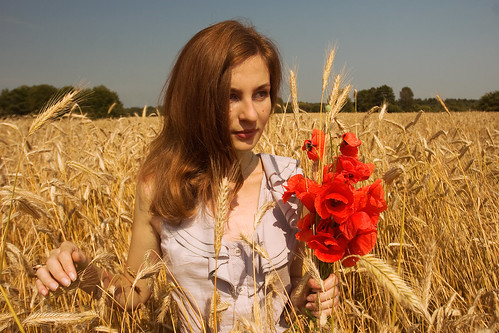 Field of poppy_color