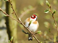 Single Best Bird Pic