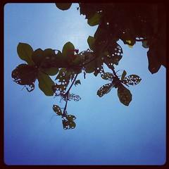 Yummy leaves