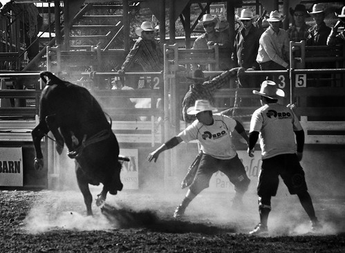california light blackandwhite shadows noiretblanc shades bull lakeside rodeo americana southerncalifornia athlete stark drama tones rider sportsaction bullriding lifesavers bullrider enblancoynegro dramaticlight directionallight lakesiderodeo schwarzundweis