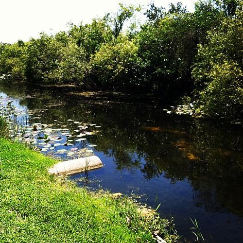 Everglades #ejktakemiami