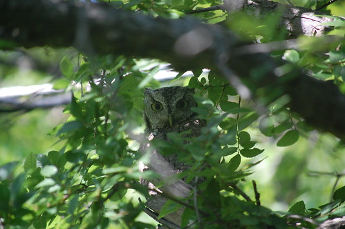 Owl checking us out!