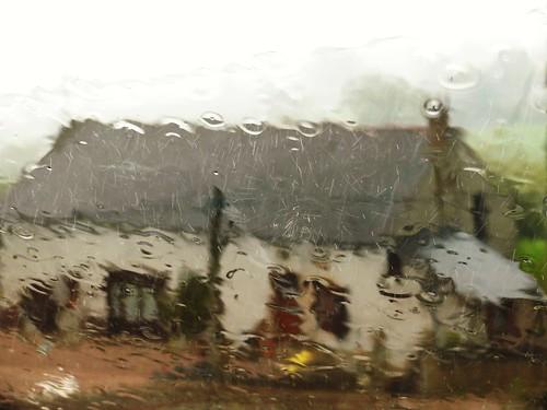1336 Rainy spring by Nebojsa Mladjenovic