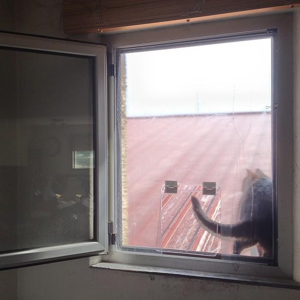 Et une chati re de fen tre ouverte en plexiglas une for Fenetre ouverte
