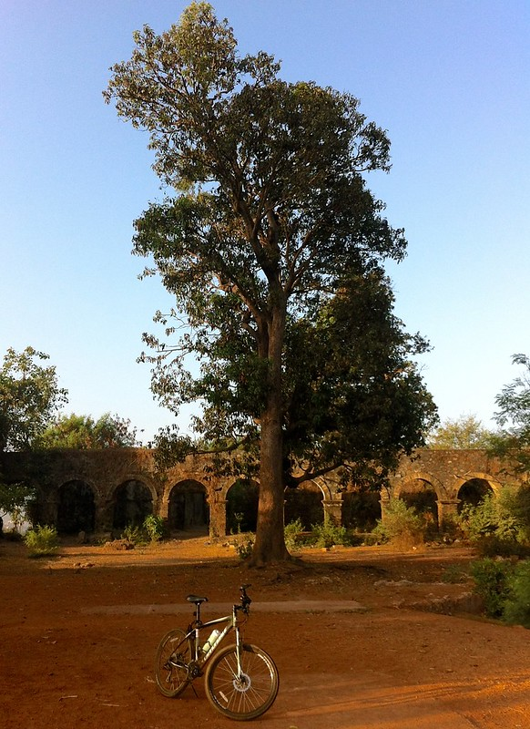 Ghodbunder Fort - Tree in the fort grounds