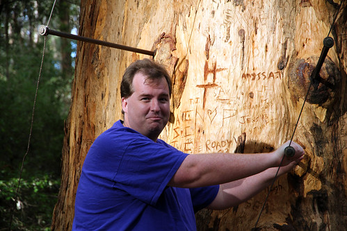 Pemberton - Gloucester Tree - Mike Knows The Tree Is Not His To Climb