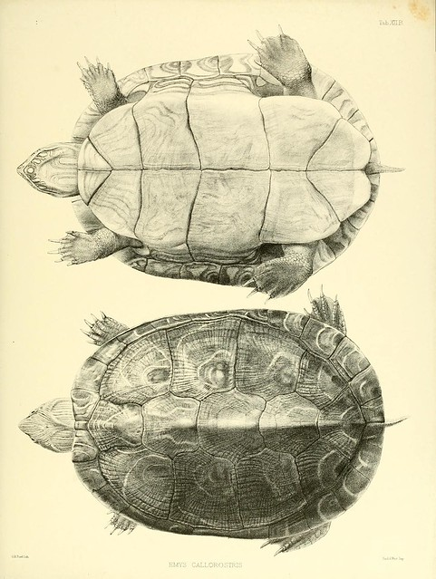 Catalogue of shield reptiles in the collection of the British Museum pt.1