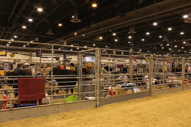 Houston-Rodeo-2013