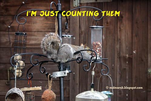 Squirrel Tale 4.jpg