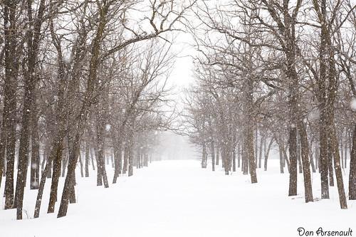 trees winter snow landscape winnipeg 365 project365 canonef24105f4lisusm labarrierepark canoneos5dmarkii donarsenault