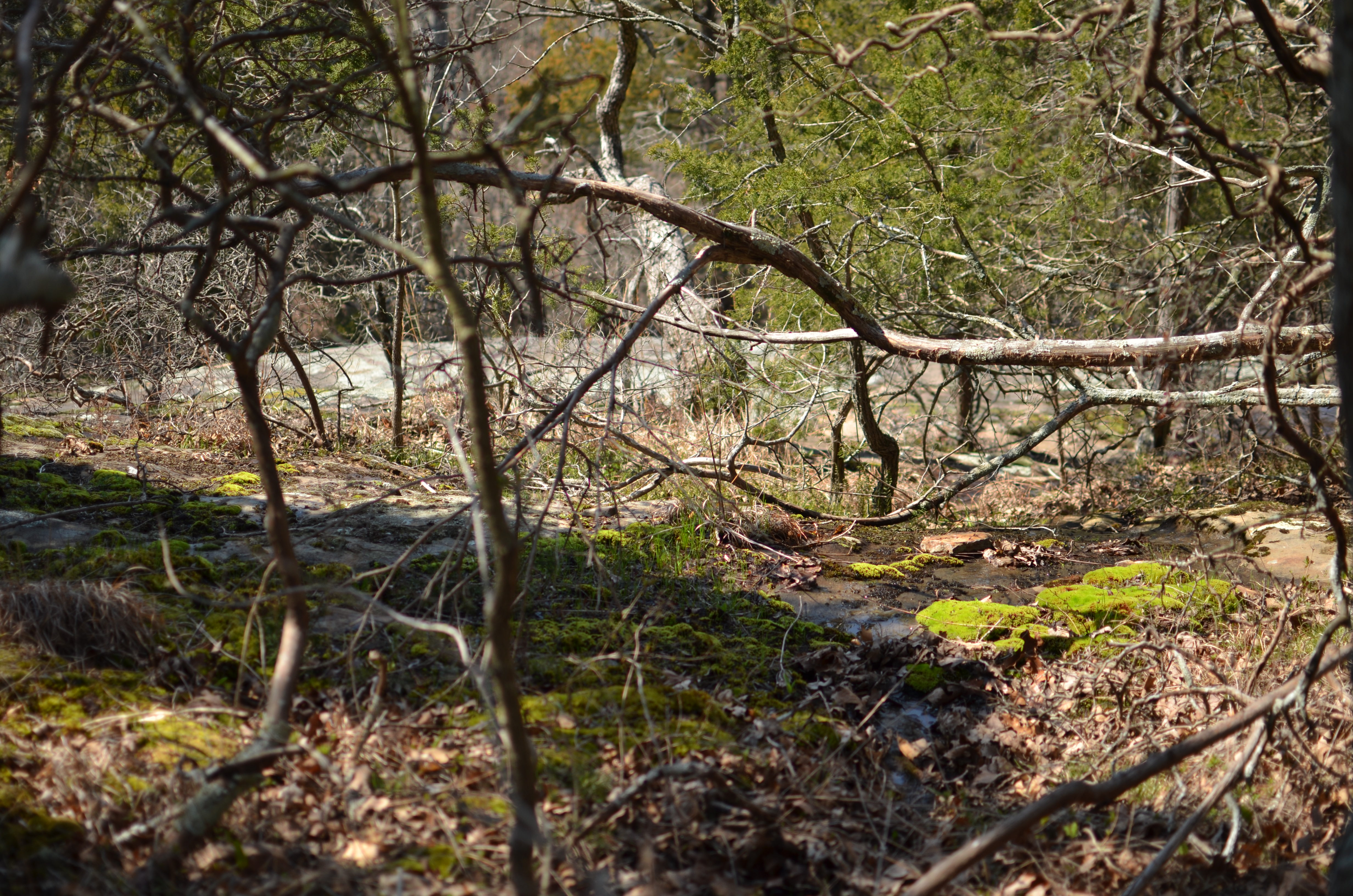 Perfect Garden Nails Glen Rock Inspiration - Brown Nature Garden ...