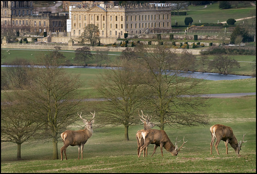 Chatsworth Deer and House by geospace