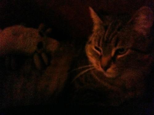Grey cat, grey mite