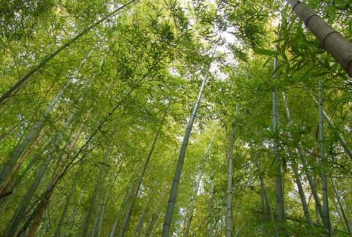 ★季節の味覚★竹の子