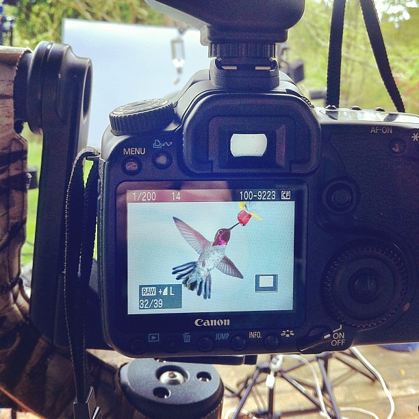 My first successful hummingbird shot! Can't wait to process these. #DayWithDad #OneSixtiethPerSecond