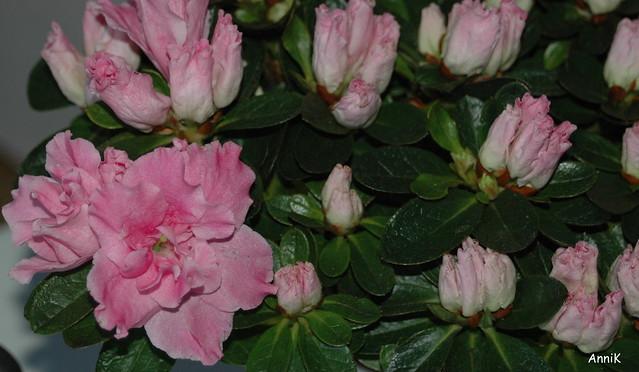 Kukkia 001