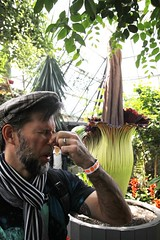 Putrella the Corpse Flower blooms at the Muttart Conservatory