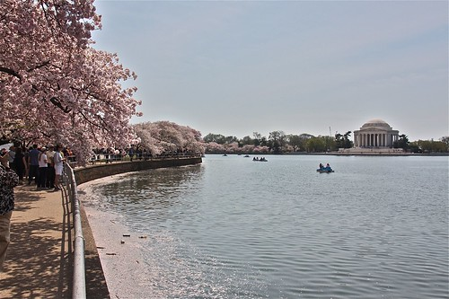 Cherry blossom time in Washington, D.C. 04