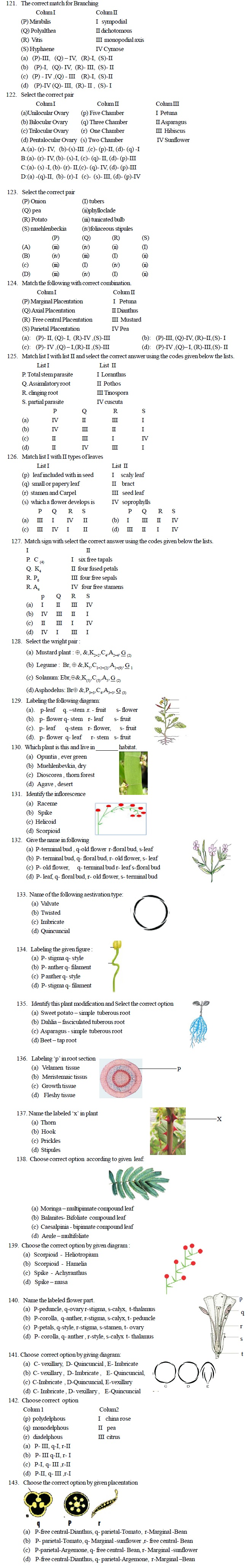 AIPMT Question Bank Biology - Morphology of Plants
