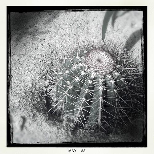 Le monde entier est un cactus by Ennev