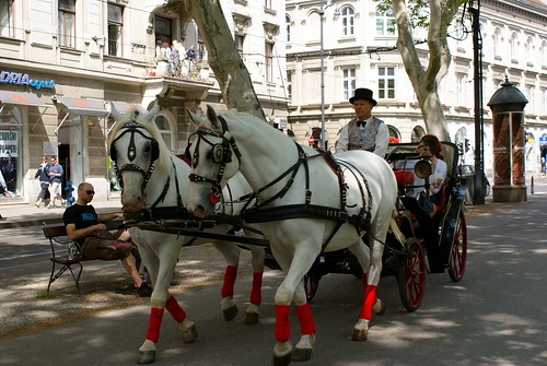 Horses in the central park