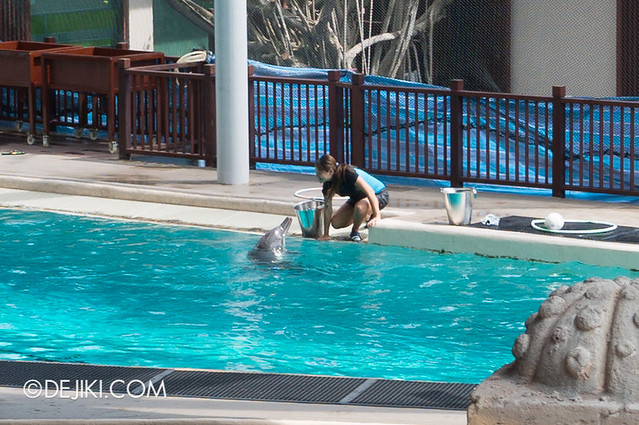 Marine Life Park Singapore - Adventure Cove Waterpark - Dolphins and trainers 2