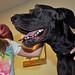 Doggone Fun @ Eastwood!