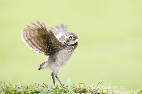 Learning To Fly by Megan Lorenz