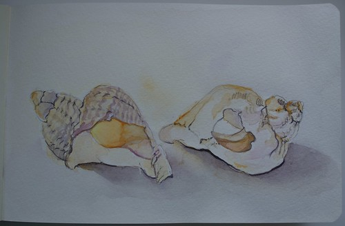 Seashells - watercolour sketch