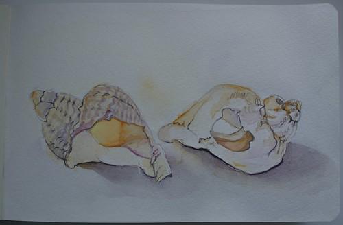 Seashells - watercolour sketch