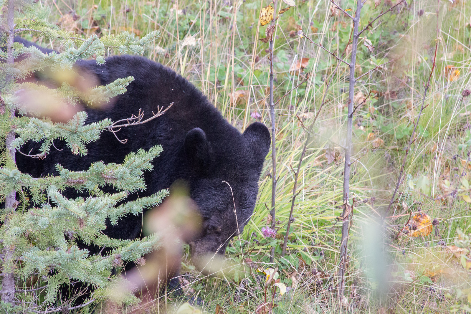 Safe and responsible bear watching in Canada
