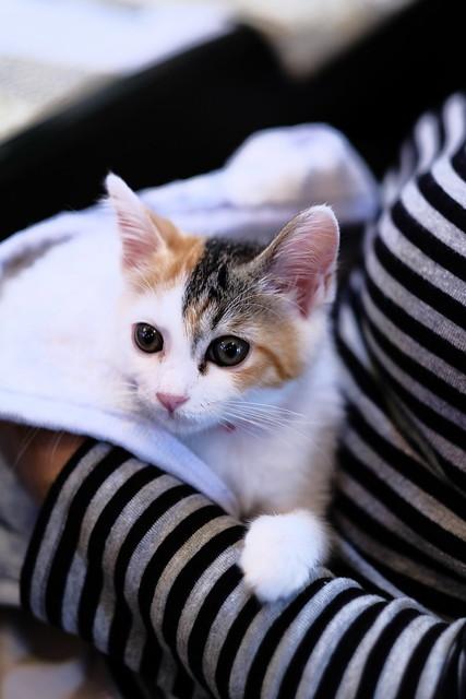 おいしそうな脚の女子校生 229脚目猫ガイジ隔離スレ [無断転載禁止]©bbspink.com->画像>4403枚