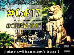 Wondering where the lions are. #CoP17 #CITESCOP17 this week (September 24-October 5) in Johannesburg, South Africa